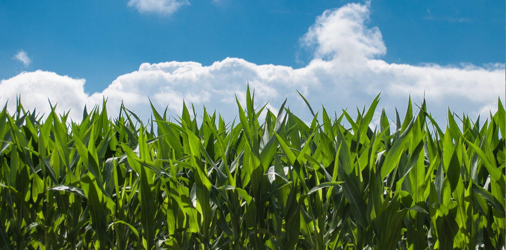 dioxido-de-cloro-agricultura_1